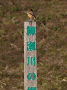 散歩で野鳥